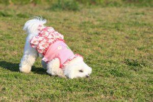 犬の下痢には腸内環境改善が大事?原因・対処・治療方法を紹介