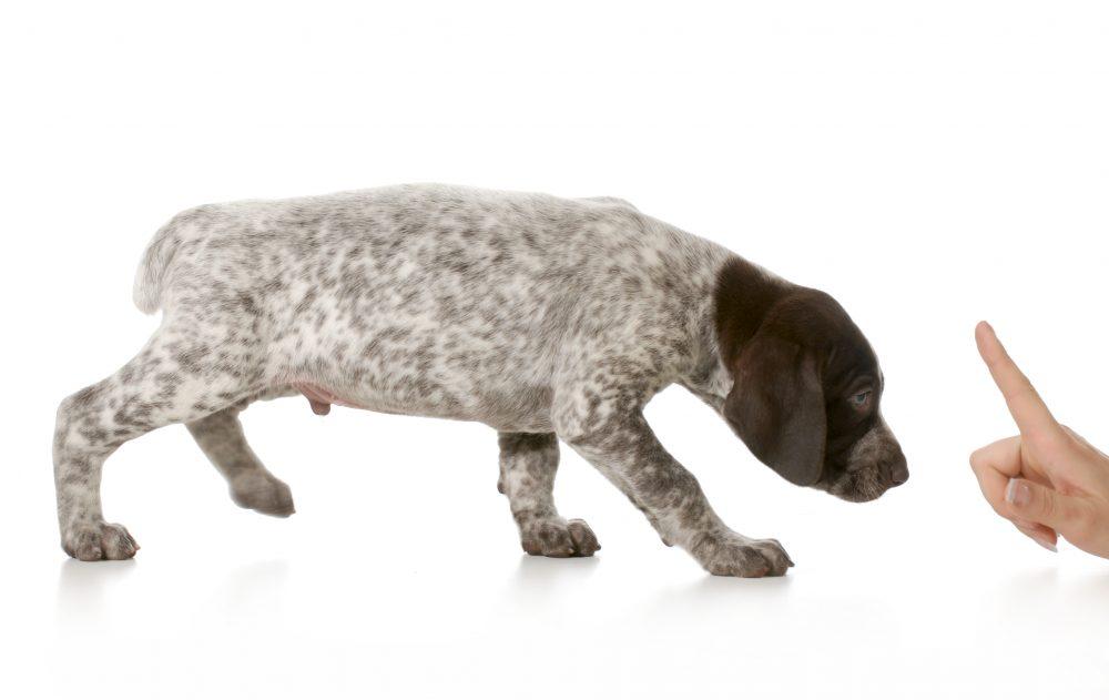 犬が足をなめる理由を知っていますか?