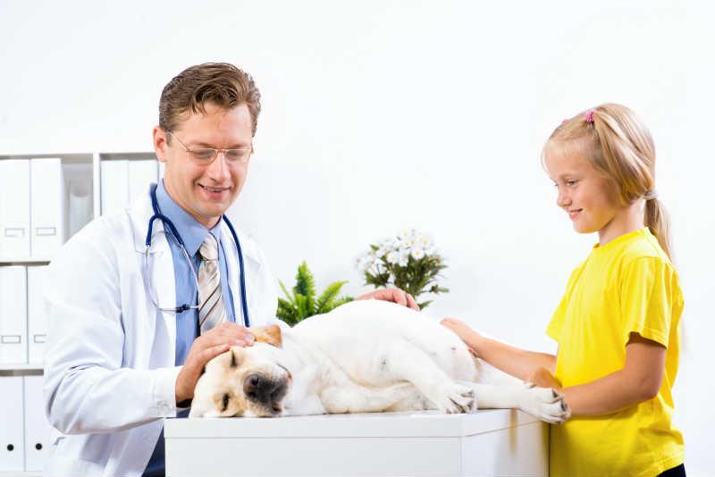 目黒区のおすすめ動物病院7選!夜間、日曜診療可能施設あり