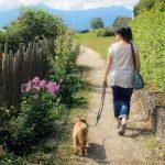正しく知ろう!犬と散歩する時の飼い主の心構え3つ