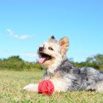 暑い夏、犬って汗かいてる???愛犬の暑さ対策をしよう