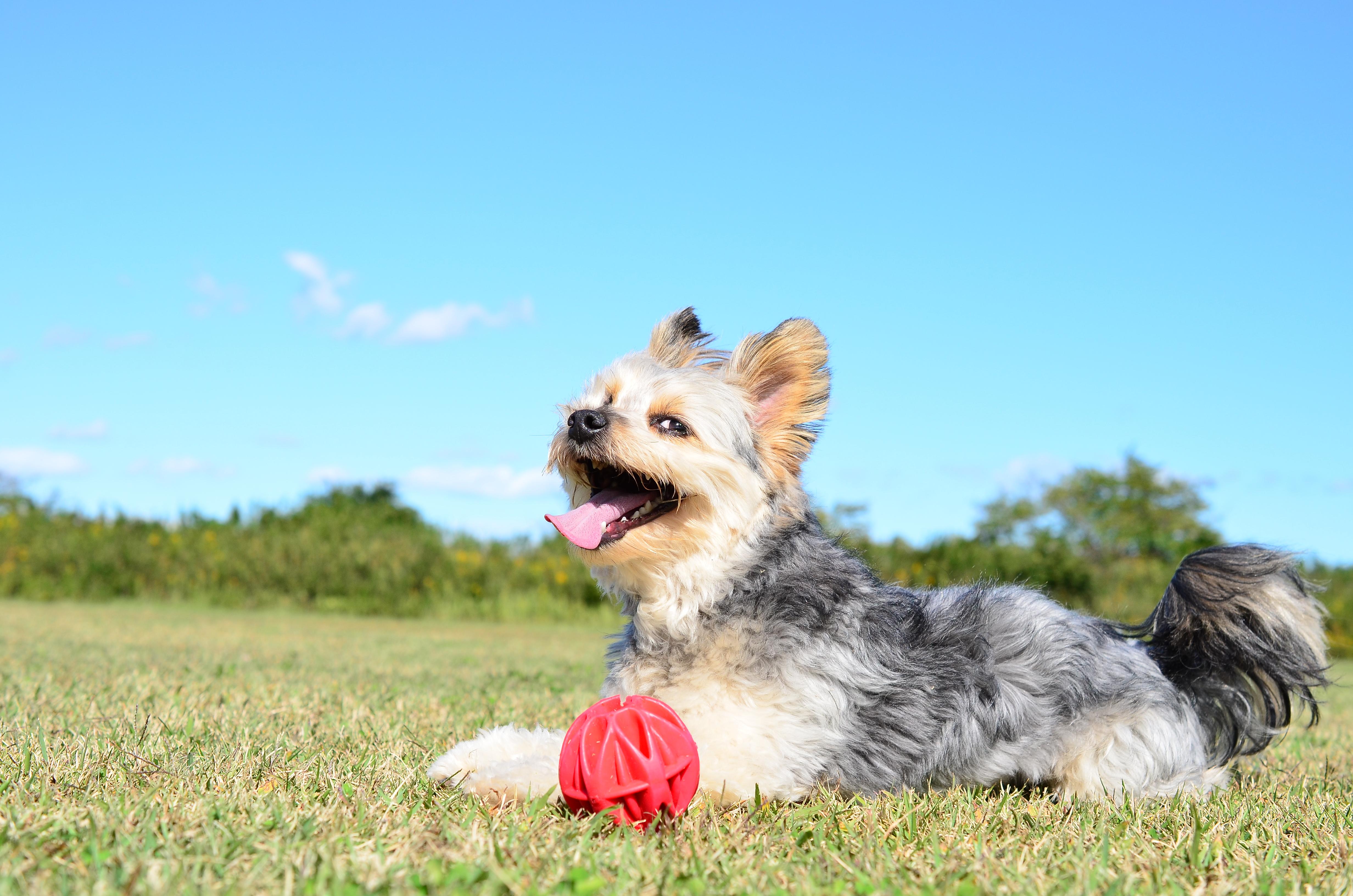 愛犬が舐めてしまうかも?もしものために安心安全な日焼け止め・虫除けを使いましょう