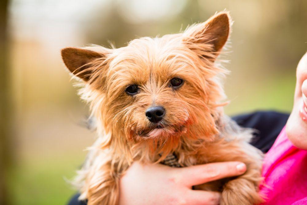 犬のリラックスポジションを知っていますか?