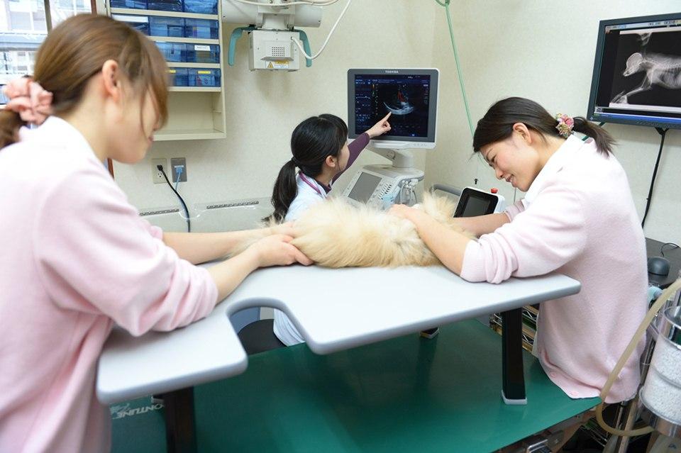 セナ動物病院