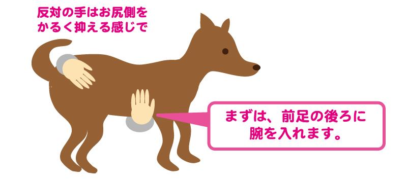 抱っこの仕方1