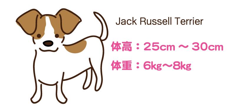 ジャックラッセルテリアの身体的特徴