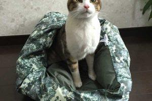 【注意】夏の猫にお留守番は危険?一人暮らしで猫を飼う人が知るべきこと