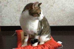 猫を音でしつけする!猫が嫌いな音はどんな音ですか?