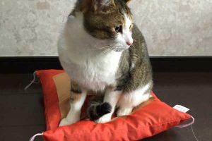 性格が悪い猫の対処法!病気の可能性もあるって本当?凶暴性は直せる?