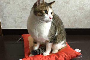 猫のしつけで困ったことありませんか?猫のしつけのポイントを5つご紹介!