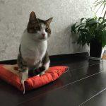 【人気】猫のしつけグッズで人気な商品は?6つのおすすめ!紹介ページ