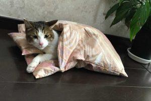 猫好き必見!猫の飼い方の本おすすめ8冊!既に飼っている方にも