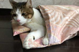 【獣医師監修】猫は寒さに弱い動物なの?人間と同じ暖房で大丈夫?【冬】猫の飼い方とは