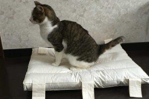 ペット可の物件が増えている?猫を賃貸住宅で飼う場合の6つの対策とは