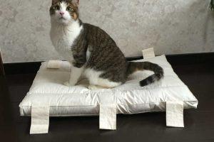 猫のおしっこのしつけのポイント!トイレの置き場所や失敗した時の声掛け