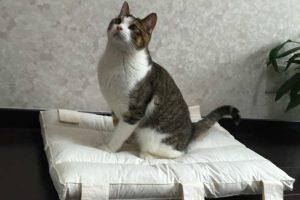 猫の遊びは短期集中?猫が遊んでほしい時に全力で遊ぶのがポイント!