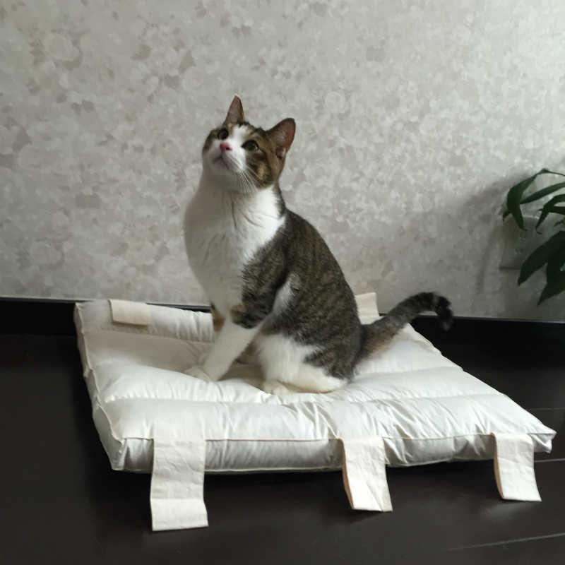 猫がシャー!と威嚇するのを止めさせたい、、どんなしつけをすればいいの?