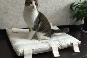 猫を飼うのにマストなトイレの話。トイレのさせ方、掃除の仕方