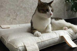 猫のしつけで水鉄砲が効果的!条件付けを効果的にしてストレス レスなしつけ