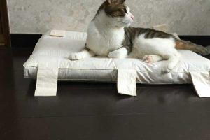 猫の性格はツンデレだけじゃない!飼いやすい猫はどのタイプ?性格6種類