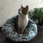 猫の飼い方|具体的な準備の手順と知っておきたい4つの心構え