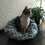 猫の簡単遊び道具♪手作りおもちゃの作り方~カリカリタッパーや猫じゃらし