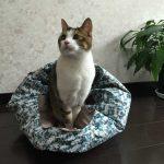 【獣医師監修】猫のおやつには無添加がいいのは何故?おすすめの無添加の猫おやつ