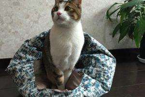 ペットシーツタイプを使った猫のトイレしつけ法!猫砂との違いやメリットとは