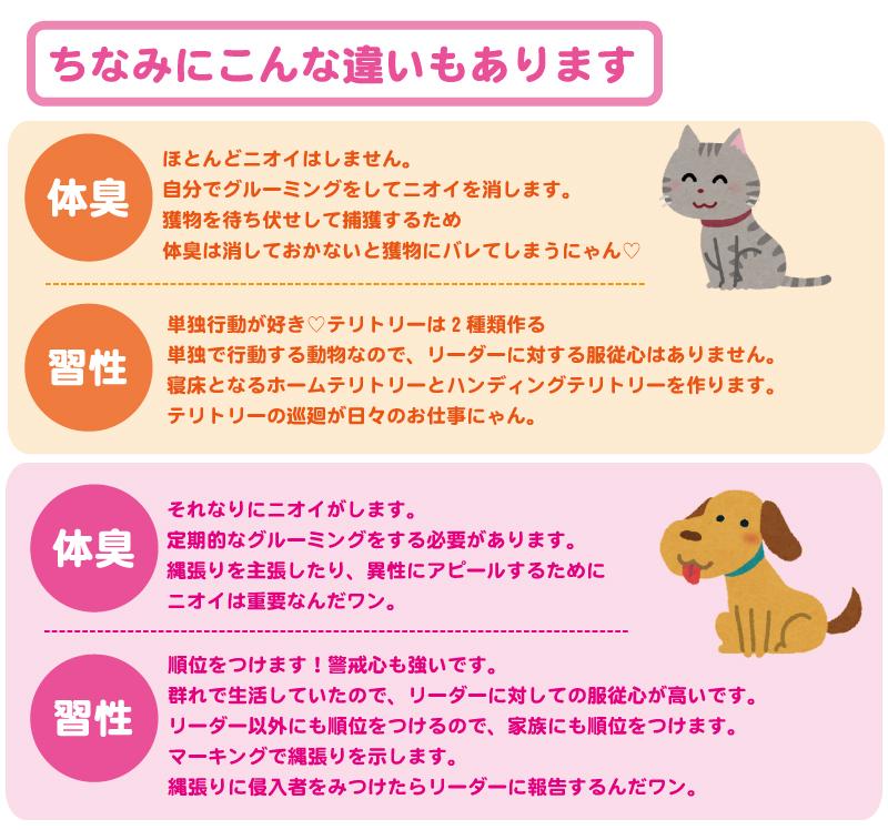 犬とネコの違い