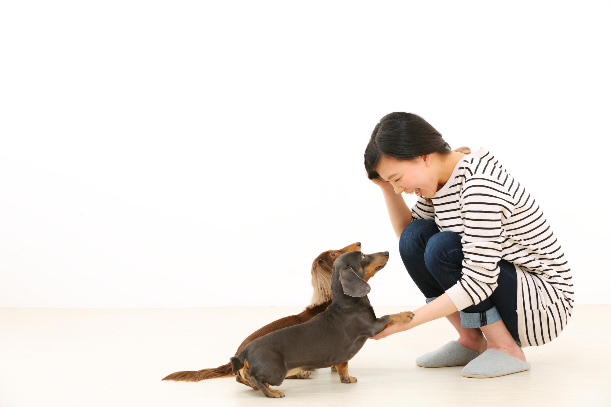 【しつけ・まとめ】正しい しつけ方法で愛犬との絆も深まる!押さえておきたいしつけの基本!