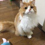 【初心者にオススメ】飼いやすい種類の猫はどんな猫?人気NO1の猫は?