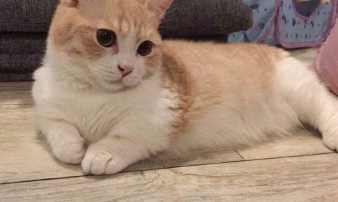 猫に爪とぎのしつけって可能?にゃんこの性質を理解して爪とぎのしつけをしよう。