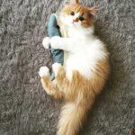 【安全】猫にあげてもいいおやつ・あげてはダメなおやつリスト