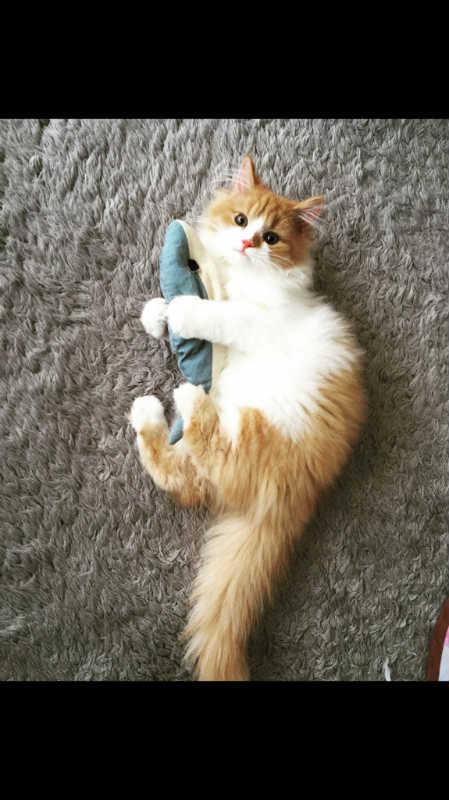 【獣医師監修】【疑問】猫の水分補給でミルクはあり?あげるとしたら、どんな種類?