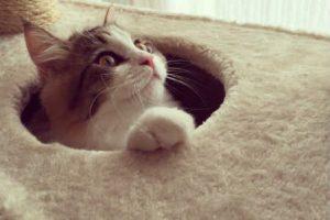 猫と本気で遊びたい飼い主さんへ!猫まっしぐら?遊び用道具&アイデア集