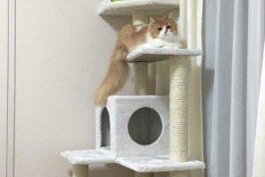 猫がニャ~ンと喜ぶ!上手な遊び方特集|子猫は?飽きたらどうする?