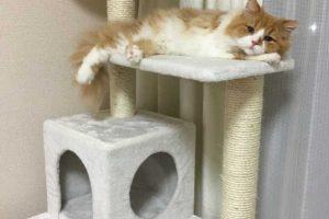 猫の遊び場ってキャットタワー以外に何がある?家の中に遊び場を作ろう