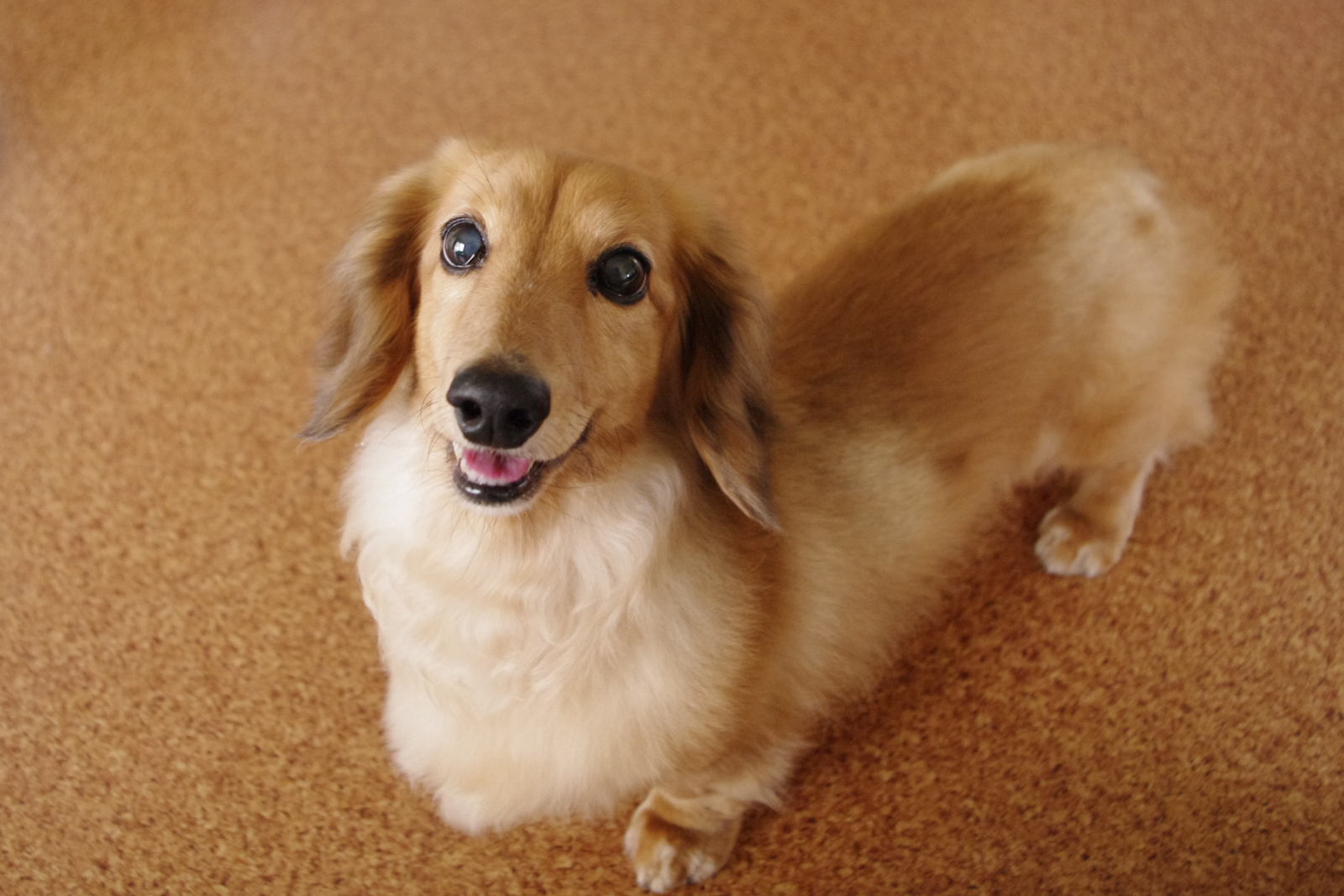 室内でできる愛犬との遊び方ってなにがある?