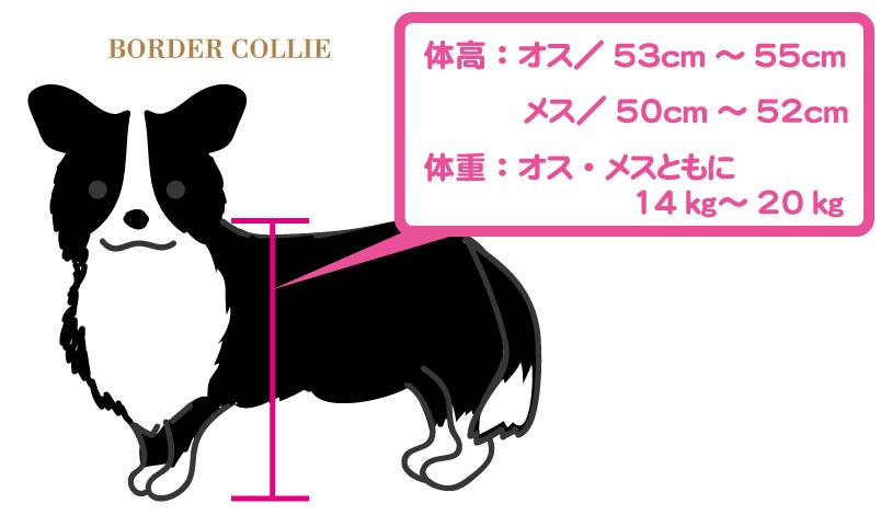 ボーダーコリーの体高と体重