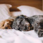 犬の平均睡眠時間を知っていますか?環境や年齢・犬種によって違う?