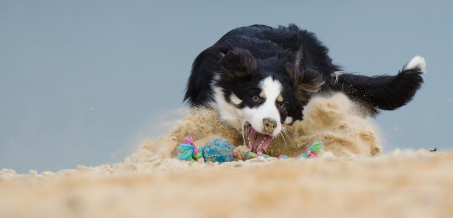4つの方法を知って愛犬をを乾燥から守ろう!