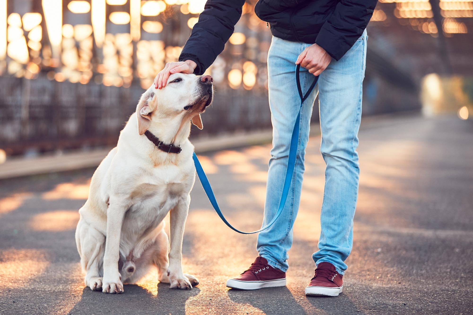 これで完璧!愛犬に「ヒール・つけ(ついて)・横」の教え方と注意点とは