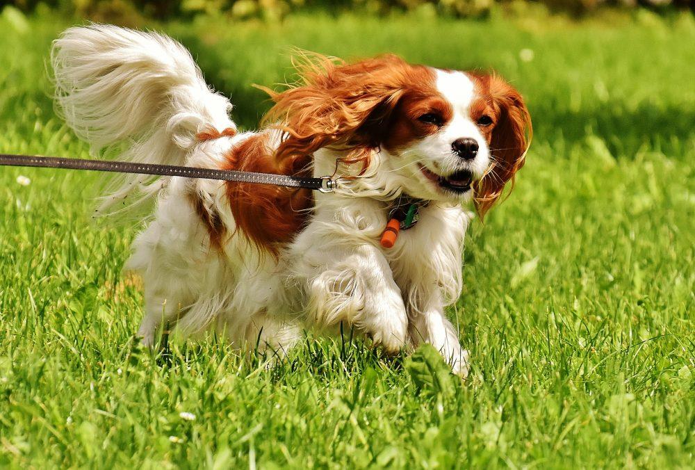 愛犬が夏バテ!暑い夏から愛犬を守るために