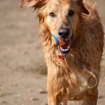 わんちゃんも冷えは大敵!犬の「温活」 で毎日ヘルシーに暮らしたい