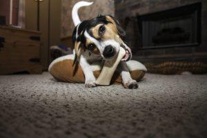 犬の早食いは危険!?効果的な防止法とおすすめグッズ♪