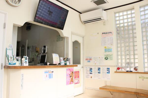 茅ヶ崎市の動物病院5選!夜間対応など評判の施設特集!