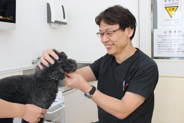 茅ヶ崎市の動物病院【3選】夜間対応など評判の施設特集!