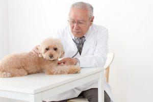 犬も脳腫瘍になる?症状・原因・治療などを解説