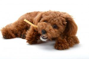 愛犬が病気になってはじめてわかった、食べ物の大切さ