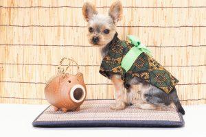 犬用ドリンクで愛犬の熱中症対策をしよう